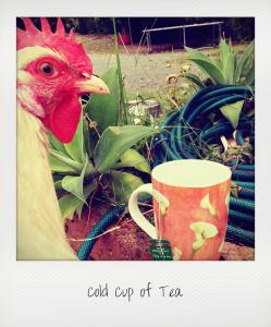cold cup of tea1