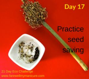Eco Challenge Day 17