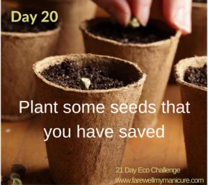 Eco Challenge day 20