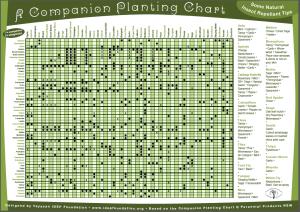 Companion Planting Chart